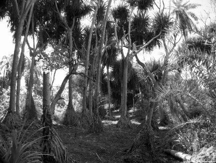 Jozani coral forest. Photo copyright: David Bartholomew