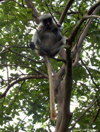 The undoubted stars of the forest were the endemic Zanzibar red colobus monkeys though. Photo copyright: David Bartholomew