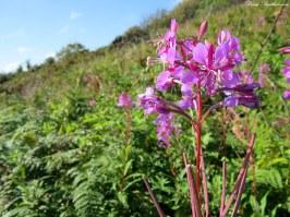 Wildflowers, Cornwall. Photo copyright: David Bartholomew