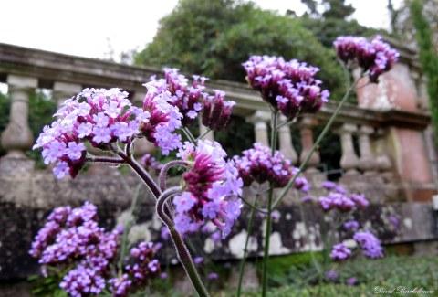 Flowers, Penryn campus, Cornwall. Photo copyright: David Bartholomew
