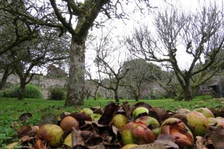 The orchard, Penryn campus, Cornwall. Photo copyright: David Bartholomew
