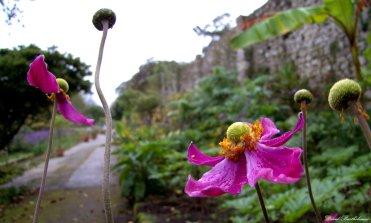 Flowers on Penryn Campus, Cornwall. Photo copyright: David Bartholomew