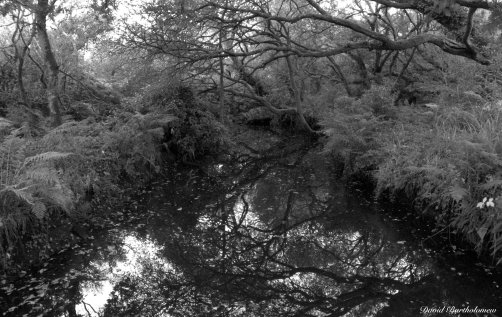 College reservoir, Penryn, Cornwall. Photo copyright: David Bartholomew