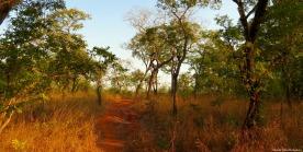 Kilombero valley, Tanzania. Photo copyright: David Bartholomew