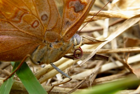 Butterfly, Kilombero valley, Tanzania. Photo copyright: David Bartholomew