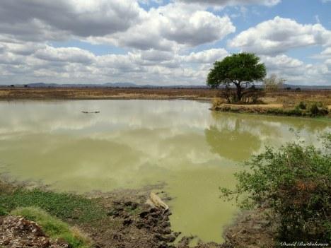 Mikumi, Tanzania. Photo copyright: David Bartholomew