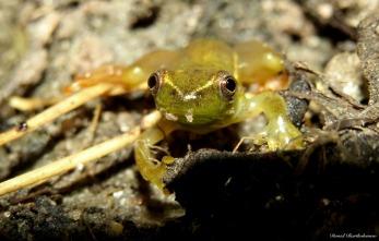 Frog, Iluma, Tanzania. Photo copyright: David Bartholomew