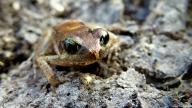 Frog, Tanzania. Photo copyright: David Bartholomew