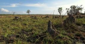 Iluma, Tanzania. Photo copyright: David Bartholomew