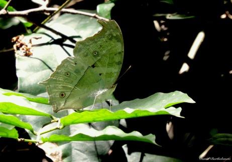 Butterfly, Udzungwa mountains, Tanzania. Photo copyright: David Bartholomew