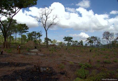 Logging for charcoal, Kilombero valley, Tanzania. Photo copyright: David Bartholomew