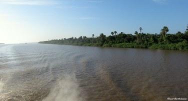 The Amazonian forest of Para state, Brazil. Photo copyright: David Bartholomew