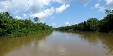 Eastern Amazonian forest, Para, Brazil. Photo copyright: David Bartholomew