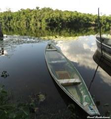Caxiuanã National Forest, Para, Brazil. Photo copyright: David Bartholomew
