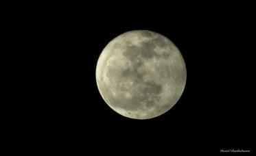 Moon. Photo copyright: David Bartholomew