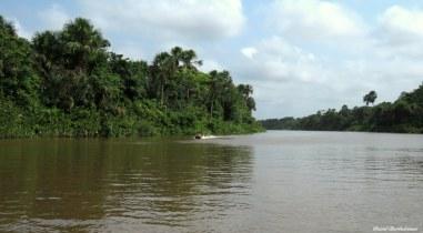 Amazonian forest, Para, Brazil. Photo copyright: David Bartholomew