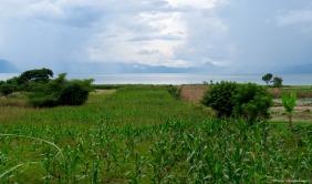 Cornfields on Samosir Island, Lake Toba, Sumatra, Indonesia. Photo copyright: David Bartholomew