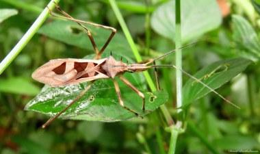 Insect. Photo copyright: David Bartholomew