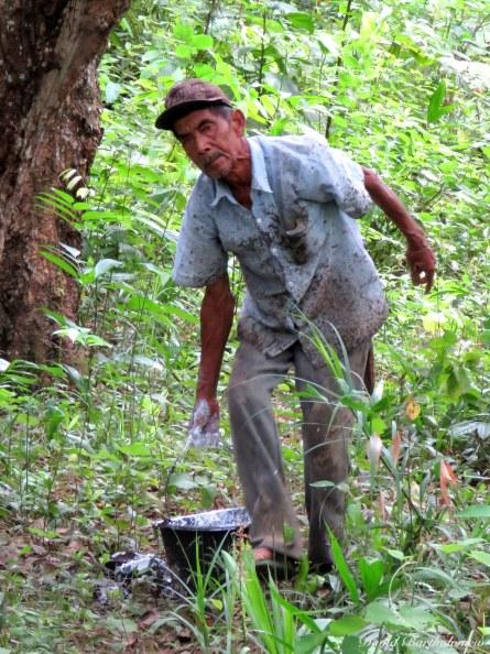 Rubber farmer. Photo copyright: David Bartholomew