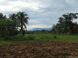 Rice paddies, Timbang Lawang. Photo copyright: David Bartholomew