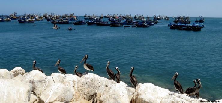 Peru Fisheries photo