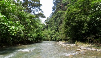 Gunung Leuser National Park, Sumatra, Indonesia. Photo copyright: David Bartholomew