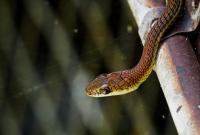 Snake. Photo copyright: David Bartholomew