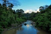 Segama river, Danum Valley. Photo copyright: David Bartholomew