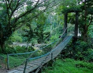 Danum valley Segama bridge. Photo copyright: David Bartholomew
