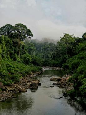 Danum valley forest. Photo copyright: David Bartholomew