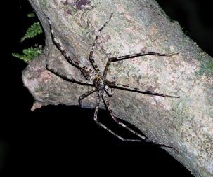 Spider. Photo copyright: David Bartholomew